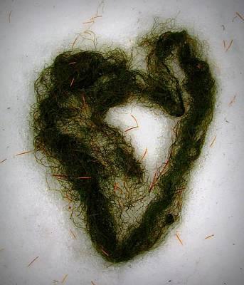 Photograph - Heart by Leah Grunzke