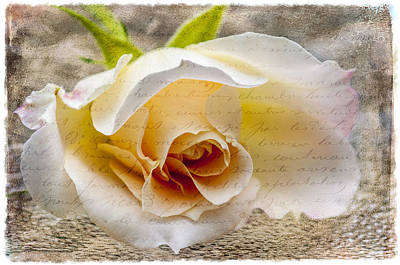 Science Collection Rights Managed Images - Heart Of A Rose Royalty-Free Image by Cathy Kovarik