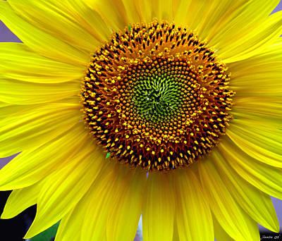 Heart Of A Sunflower Art Print