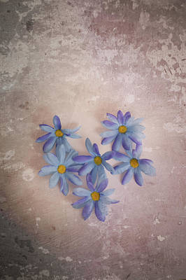 Photograph - Heart Of Daisies by Elvira Pinkhas