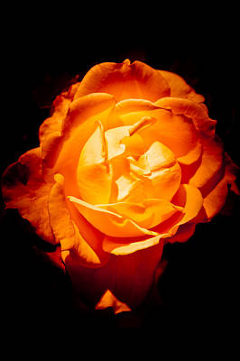 Gold Roses Photograph - Heart Of Gold by Loriental Photography