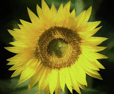 Photograph - Heart Of Gold Sunflower by Kathy Clark