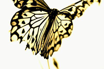 Insects Photograph - Heart Of Gold by The Art Of Marilyn Ridoutt-Greene