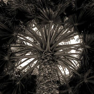 Digital Art - Heart Of Palm by Richard Hinds