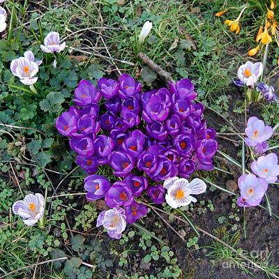 Photograph - Heart Of Spring by Linda Prewer