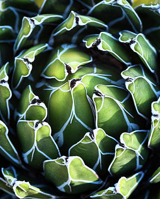 Photograph - Heart Of The Agave  by Saija Lehtonen