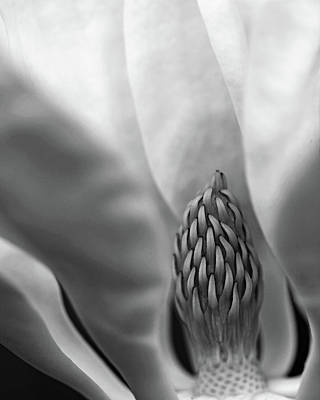 Photograph - Heart Of The Magnolia Black And White by Debbie Oppermann
