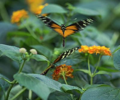 Butterfly Garden Photograph - Heart Of The Matter by Betsy Knapp