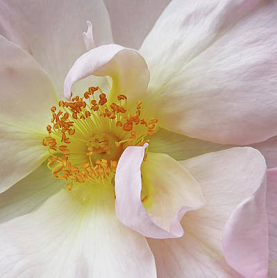 Photograph - Heart Of The Rose by Gill Billington