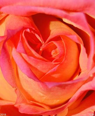 Photograph -  Heart Of The Rose by Lisa Wooten