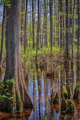 Photograph - Heart Of The Swamp 2 by Susan Rissi Tregoning