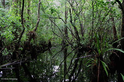 Photograph - Heart Of The Swamp by Barbara Bowen