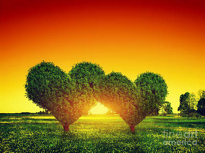 Couple Photograph - Heart Shape Trees Couple On Green Grass Field At Sunset by Michal Bednarek