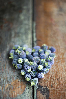 Heart Shaped Blue Thistle Buds Art Print