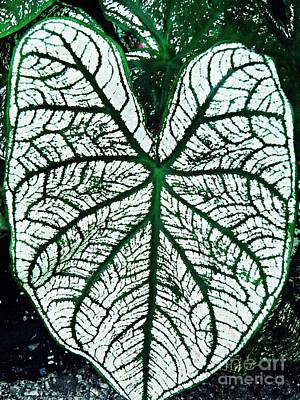 Photograph - Heart Shaped Leaf by Sarah Loft