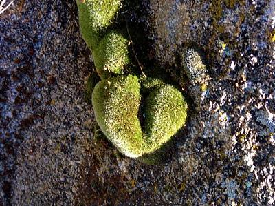 Photograph - Moss Has Heart  by Deborah Moen