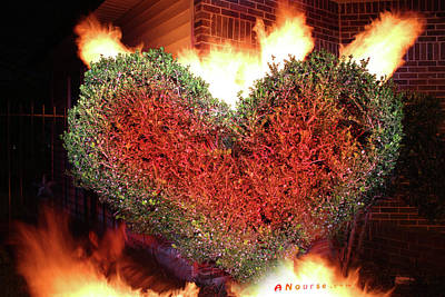 Photograph - Heart Shrub by Andrew Nourse