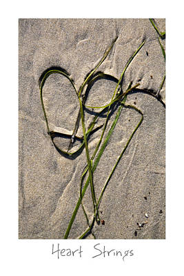 Photograph - Heart Strings by Peter Tellone