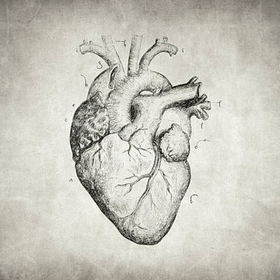 Poetic Drawing - Heart by Taylan Apukovska