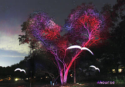 Photograph - Heart Tree And Birds by Andrew Nourse