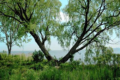 Water St Chicago Photograph - Heart Tree On Lake Saint Clair by LeeAnn McLaneGoetz McLaneGoetzStudioLLCcom
