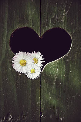 Photograph - Heart With Daisies by Mihaela Pater