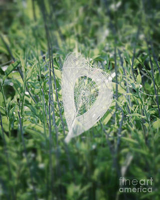 Photograph - Hearts In Nature - Heart Shaped Web by Kerri Farley