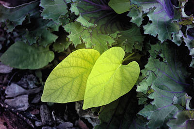 Hearts In Nature Art Print