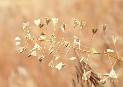 Photograph - Hearts In The Weeds by Carol Groenen