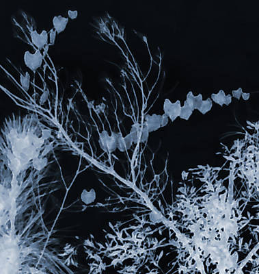 Photograph - Hearts Of Nature by Gina O'Brien
