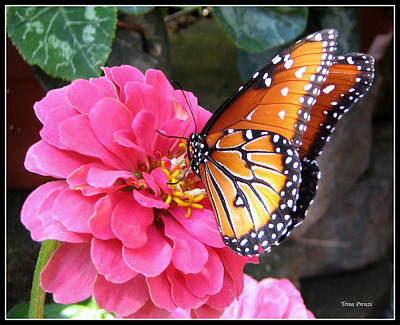 Photograph - Hearts On Her Wings by Trina Prenzi