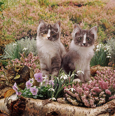 Photograph - Heather Cats by Warren Photographic