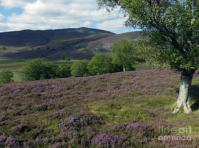 Photograph - Heather Hills - Braemar by Phil Banks