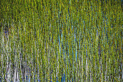 Heather Wall Art - Photograph - Heather Lake Grass by Pelo Blanco Photo