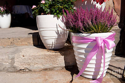 Featured Tapestry Designs - Heather Or Ling Plant In White Big Flowerpot  by Arletta Cwalina