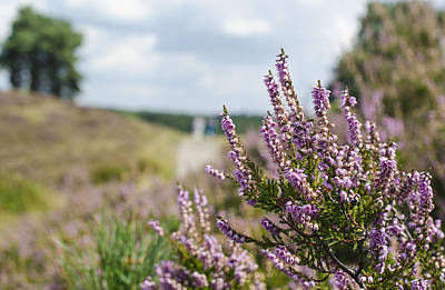 Photograph - Heather by Rainer Kersten