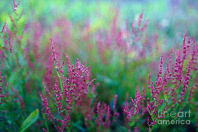 Photograph - Heathers In My Dream by Ismo Raisanen