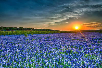 Heavely Bluebonnet Sunset Art Print
