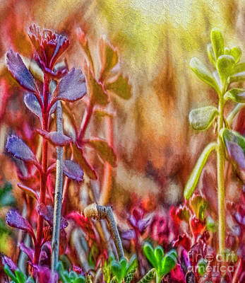 Photograph - Heaven On Earth by Jean OKeeffe Macro Abundance Art