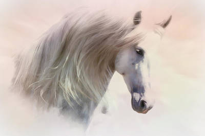 Photograph - Heavenly Andalusian Horse  by Athena Mckinzie