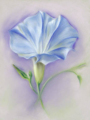 Pastel - Heavenly Blue Morning Glory by MM Anderson