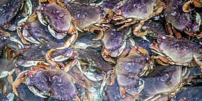Crustacean Photograph - Heavenly Crabs by Betsy Knapp