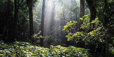 Photograph - Heavenly Light In Forest In Western Ghats India by Vishwanath Bhat