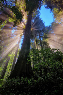 Photograph - Heavenly Light Rays by Greg Norrell