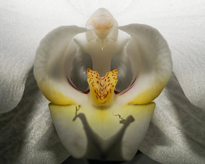 Photograph - Heavenly Orchid by Ernie Echols