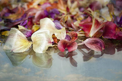 Photograph - Heavenly Petals by Carolyn Marshall