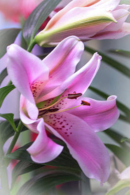 Photograph - Heavenly Pink Lily by Mother Nature