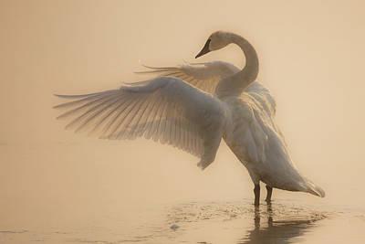 Photograph - Heavenly by Sandy Sisti