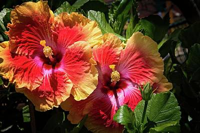 Photograph - Heavenly Tropical Twins by Lynn Bauer