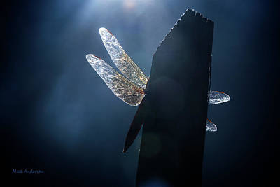 Photograph - Heaven's Light On A Dragonfly by Mick Anderson